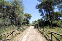 verde_catalano_21.jpg